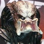 angry-predator